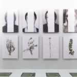 Records from autobiographical garden - Installation view (photo montage and herbalized plants) 2017.